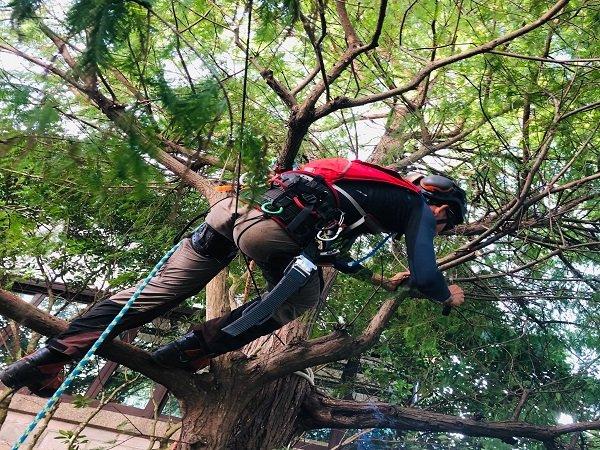 攀樹修剪樹木