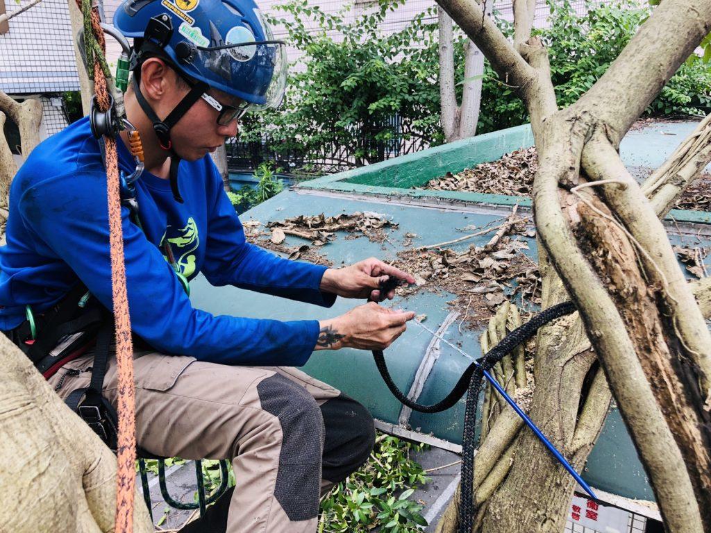 樹木支撐編織