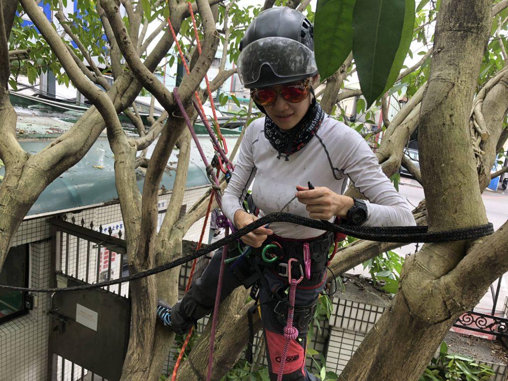 樹木支撐施工
