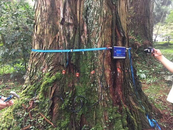 樹木風險評估 應力波