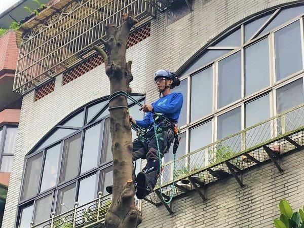 台北樹木移除